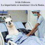 14 de Febrero: lo importante es mantener viva la llama