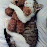 Las mascotas de los gatos