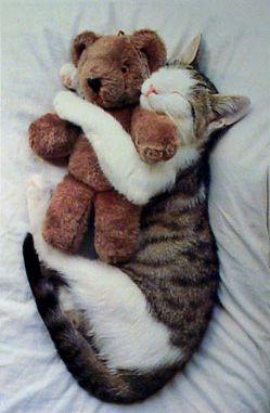 gato abrazado a osito de peluche