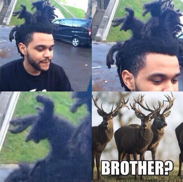 peinado ciervos en la cabeza