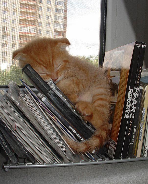 gatito durmiendo en estanteria de videojuegos