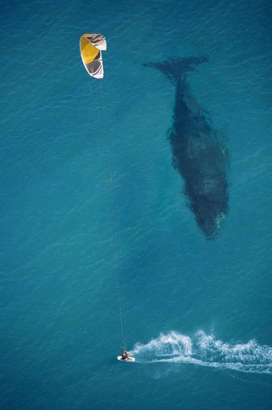 kite surfing y silueta de ballena bajo el agua