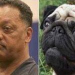 Parecidos razonables – Jesse Jackson y perro