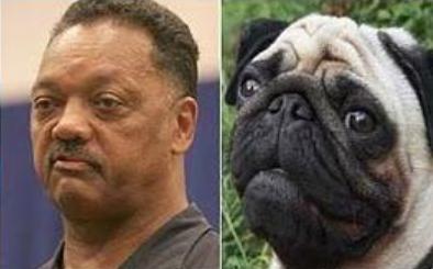 Parecidos razonables - Jesse Jackson y perro