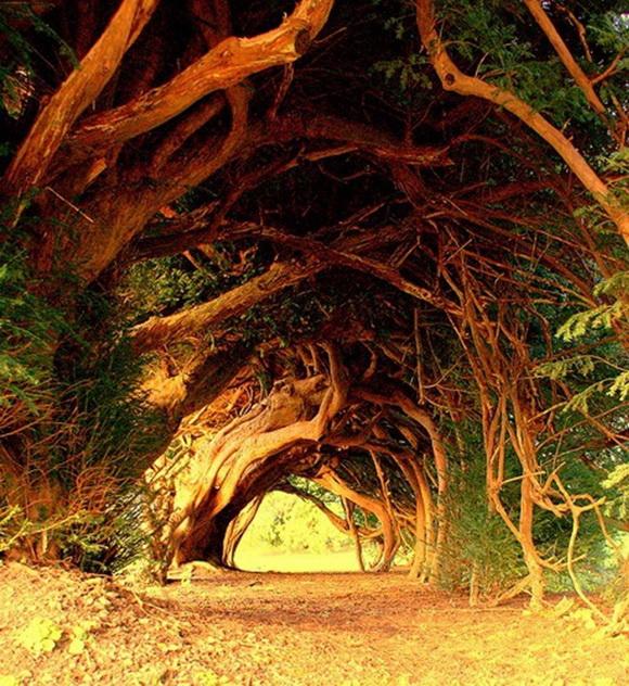 Yew Tree Tunnel, UK