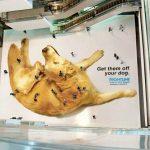 Publicidad creativa – Spray anti-pulgas para perros