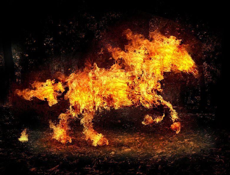 caballo de fuego salhy