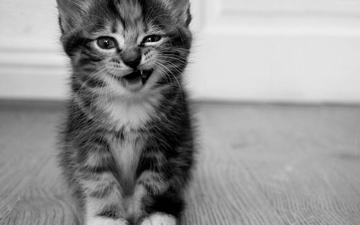 fondo gatito riendo