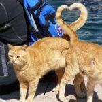 Gatos con un corazón en la cola
