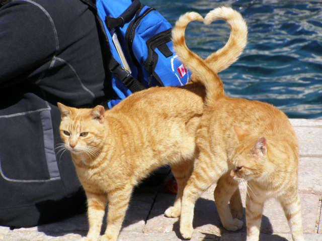 perfect timing gatos corazon con la cola