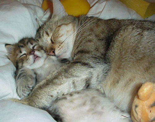 gatitos durmiendo abrazados