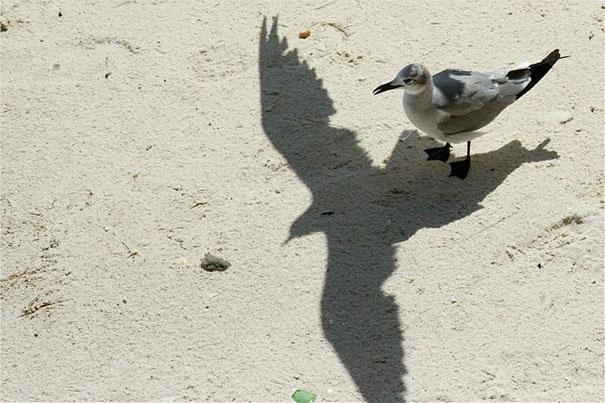 perfect timing gaviota posada en la arena y sombra con las alas levantadas