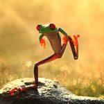 Rana bailando