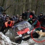 Los perros, echando una mano cuando se les necesita