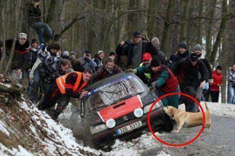 coche accidentado en rally y perro ayudando