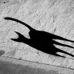 Perro con sombra de gato