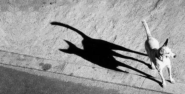 perro con sombra que parece la de un gato