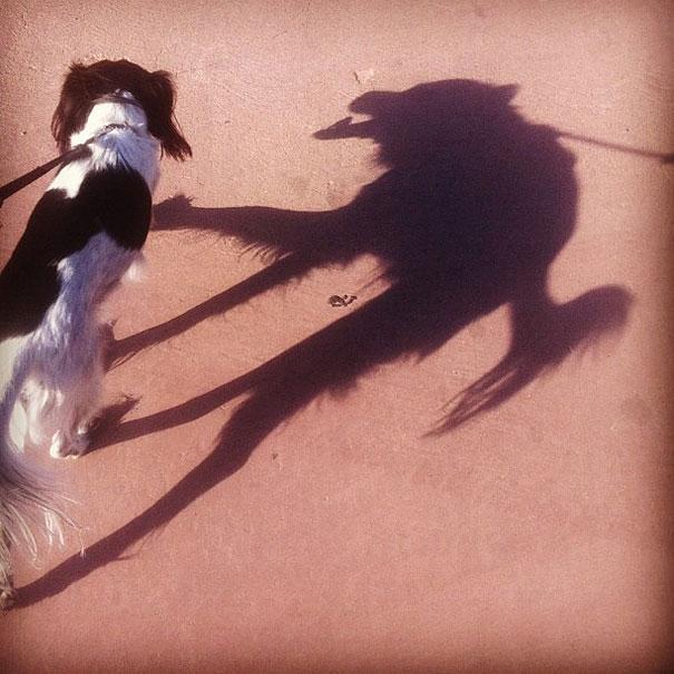 Perro con sombra WTF