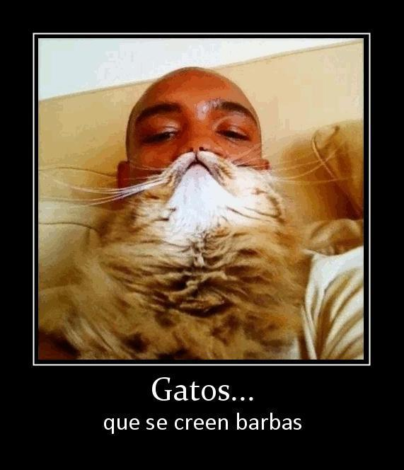 gatos que se creen barbas