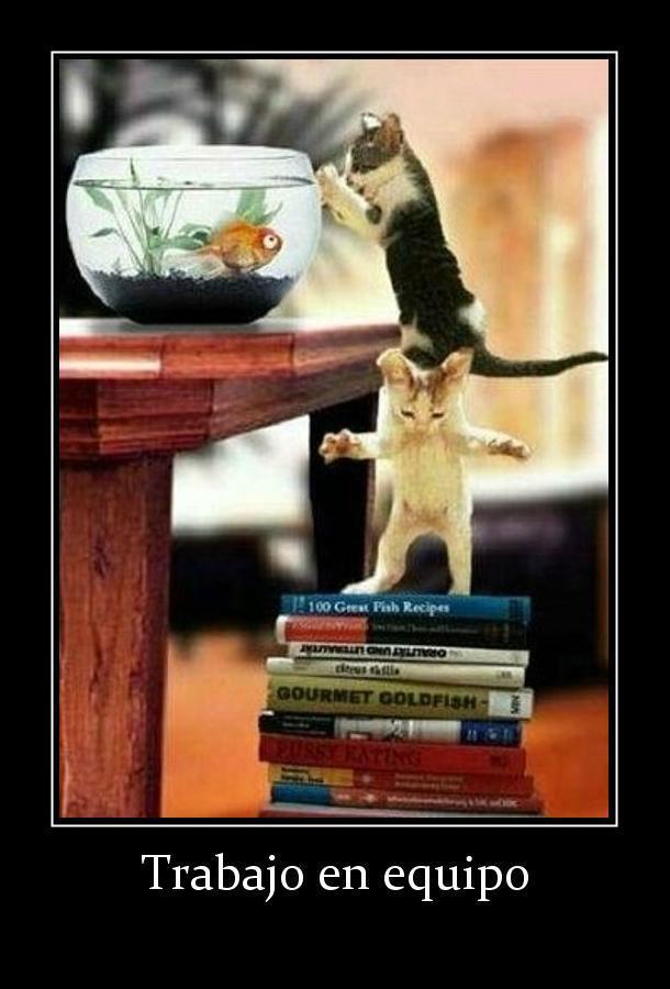 gatos trabajo en equipo definicion grafica
