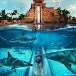 ¿Un paseíto entre tiburones?