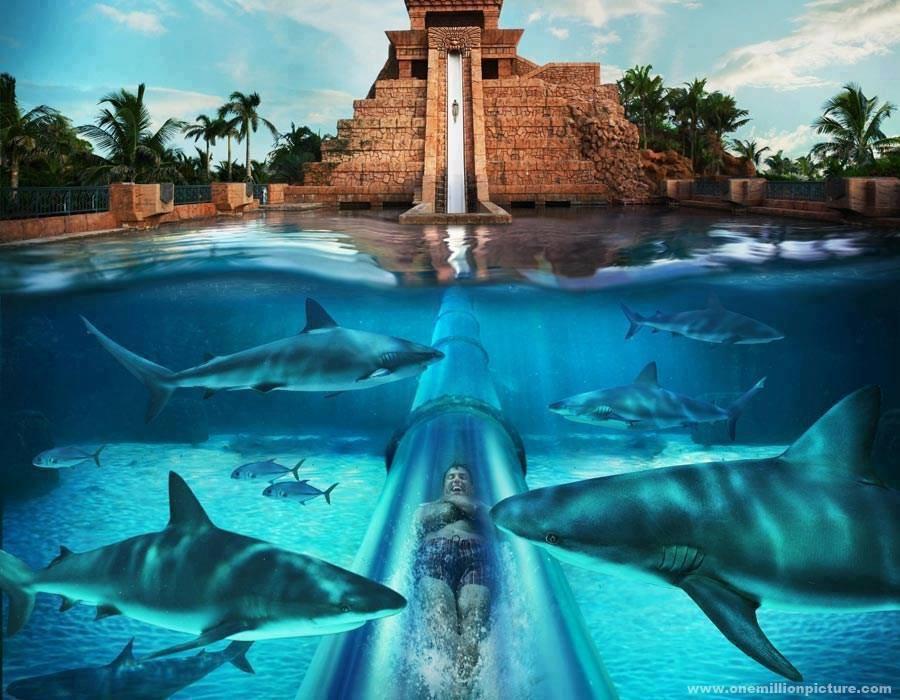 atraccion tobogan tiburones atlantis paradise island resort bahamas
