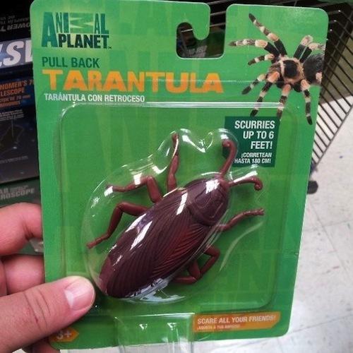 envase tarantula escarabajo fail