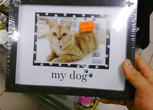 marco de foto gato my dog