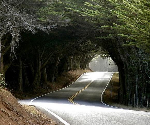 tunel natural arboles carretera estados unidos