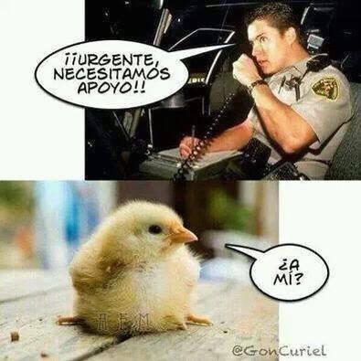 urgente necesitamos apoyo a mi pollo
