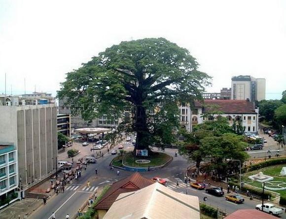 Cotton Tree, Sierra Leona