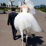 La novia caballo