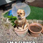 El perro flor