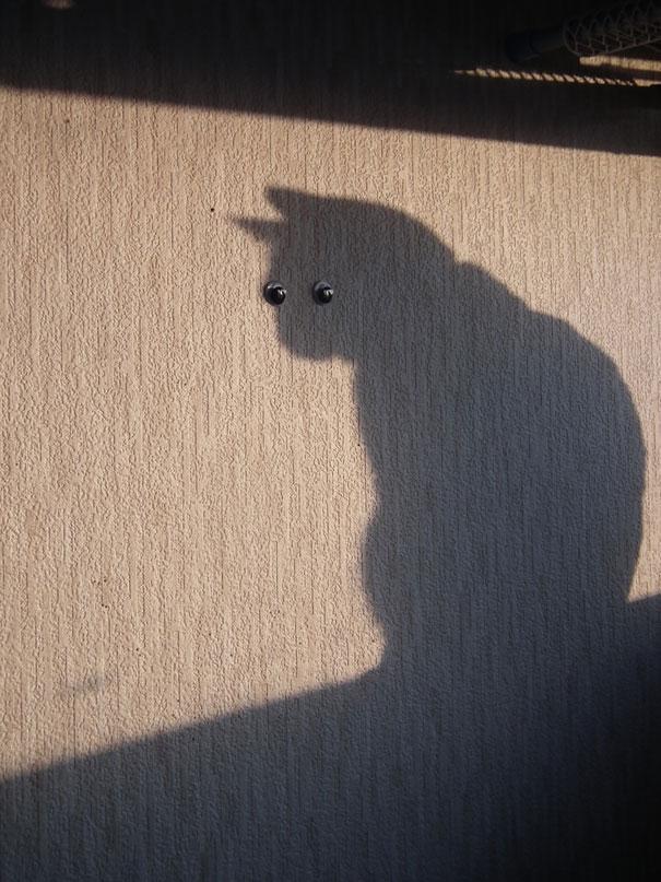 sombra gato con chinchetas como ojos