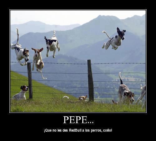 ¡Pepe, que no les des Red Bull a los perros, coño!