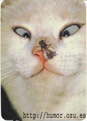 gato vizco con mosca en la nariz