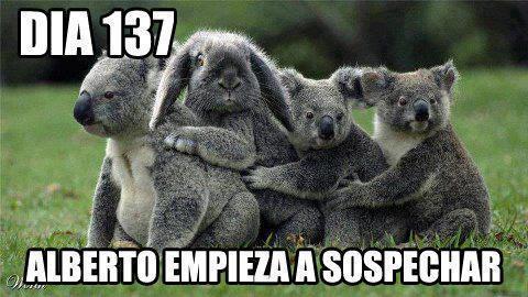 koalas y conejo en medio - dia 137 alberto empieza a sospechar