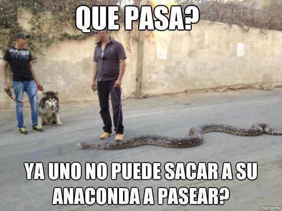 que pasa ya uno no puede sacar a su anaconda a pasear