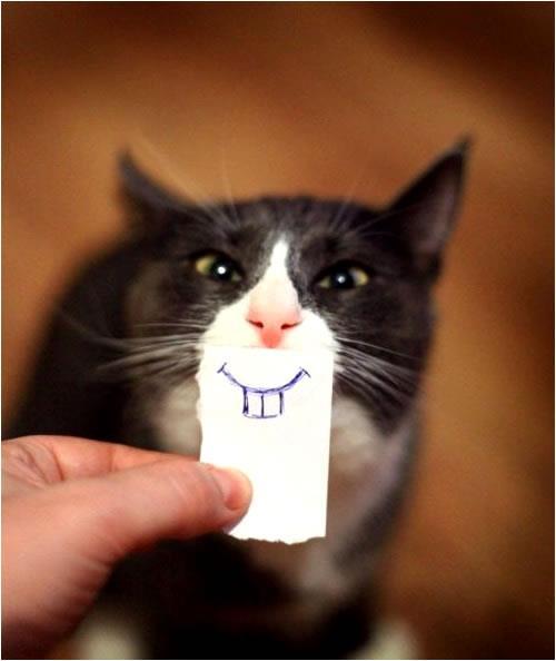 gato dibujo sonrisa
