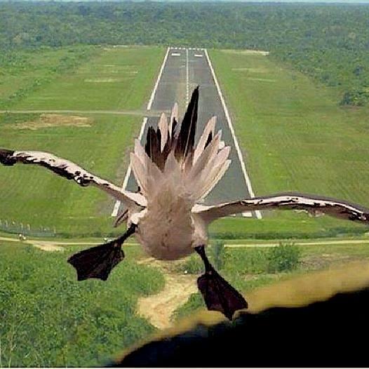 gaviota a punto de aterrizar