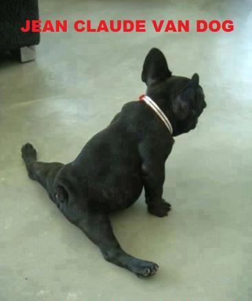 Jean Claude Van Dog