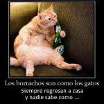Los borrachos son como los gatos…