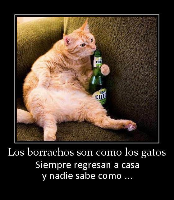 los borrachos son como los gatos siempre regresan a casa y nadie sabe como
