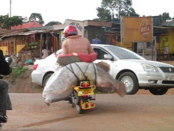 motorista con pez enorme detras
