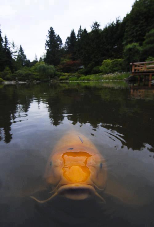 Pescando tranquilamente en el lago, cuando de repente...