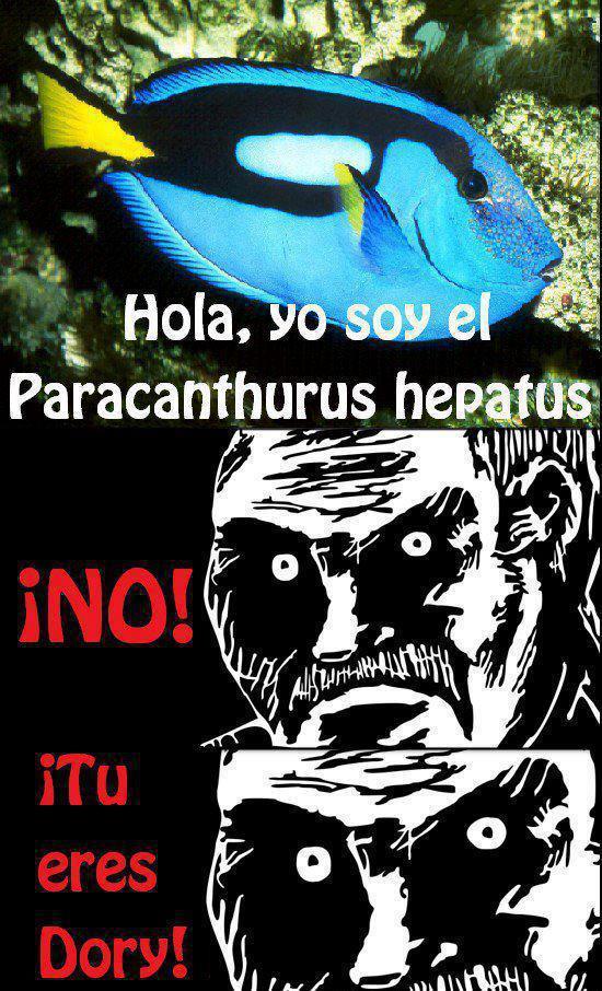 pez hola soy el paracanthurus hepatus no tu eres dory