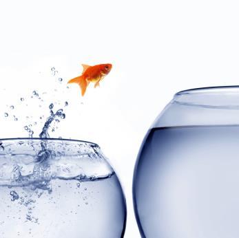 pez saltando a pecera mas grande