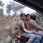 Mono, el cuarto pasajero