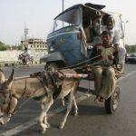 Megaconstrucciones: Carricoche tirado por burro