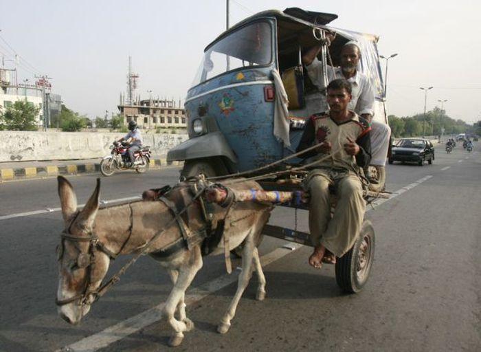 carricoche atado a burro